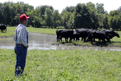 Andy Knepp, farm manager at the Nebraska College of Technical Agriculture, studies some of the farm's cattle. Knepp will receive...