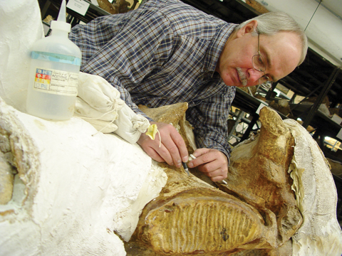 FOSSIL PREPARATION - Greg Brown, chief preparator with the University of Nebraska State Museum, removes shellac from one of two