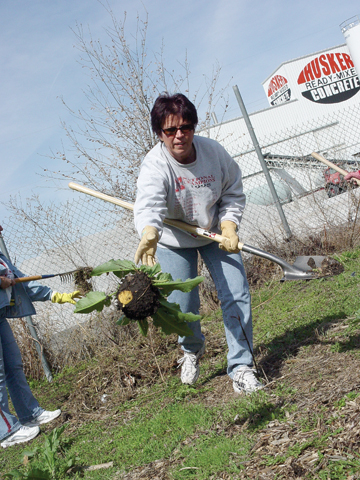 PULL AND TOSS - Lila Luft of Student Accounts tosses aside an unwanted plant at the community garden cleanup, 335 N...